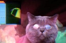 apocalipse Miau thumb