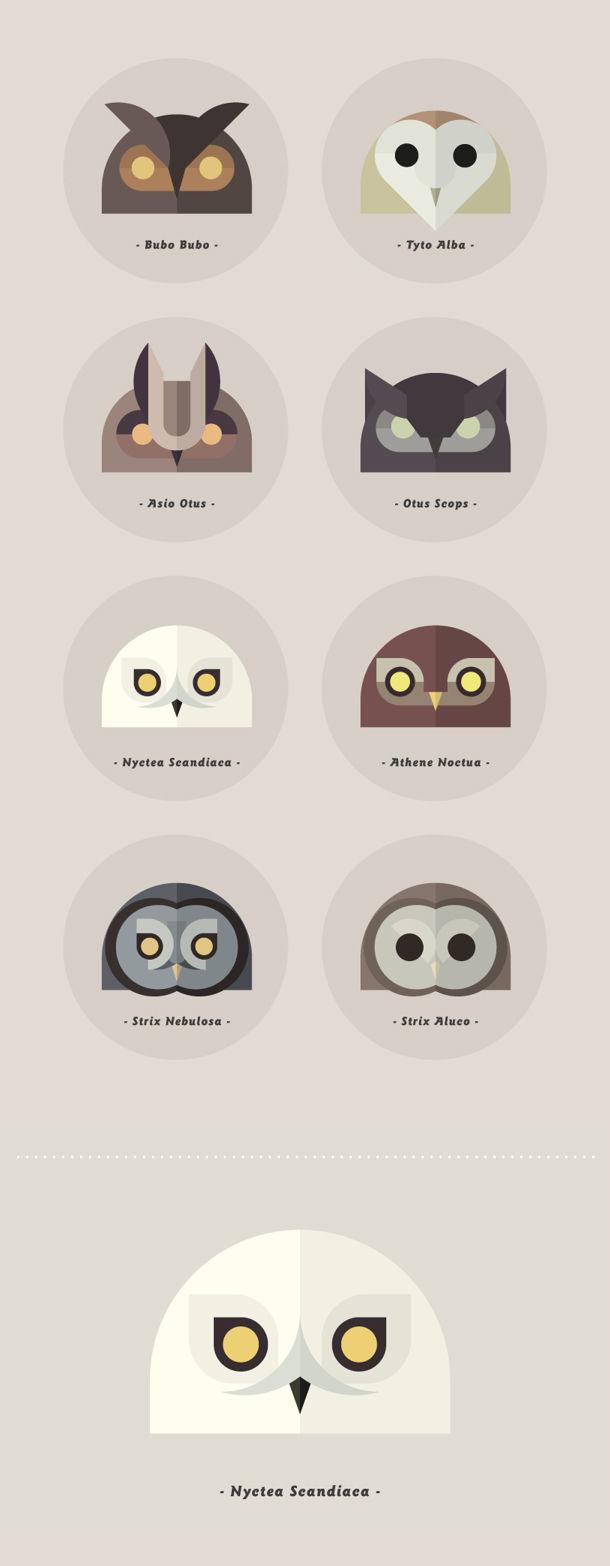 Owls sabbadini