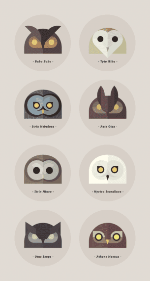 "Piccola serie di illustrazioni intitolate ""Owls of the World"" (I gufi del mondo) completamente dedicate ai gufi e alle loro varietà. Il tutto a cura del graphic designer e illustratore Alessio Sabbadini."
